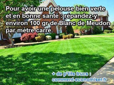 Vous rêvez d'une pelouse bien verte et en super forme ? Pas toujours simple sous nos climats  : trop de pluie, trop chaud.  Alors comment faire pour avoir une belle pelouse ? Heureusement, il existe un truc simple pour avoir une pelouse bien verte.  Découvrez l'astuce ici : http://www.comment-economiser.fr/avoir-une-pelouse-bien-verte.html