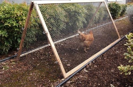 Small chicken run.