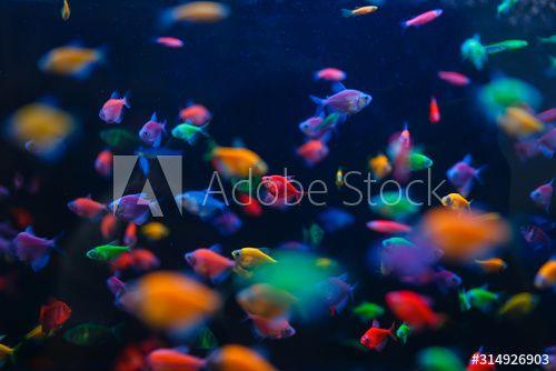Colorful Fish Variety In Aquarium Pet Store Aff Variety