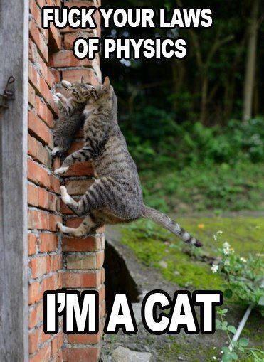 Cat versus gravity.