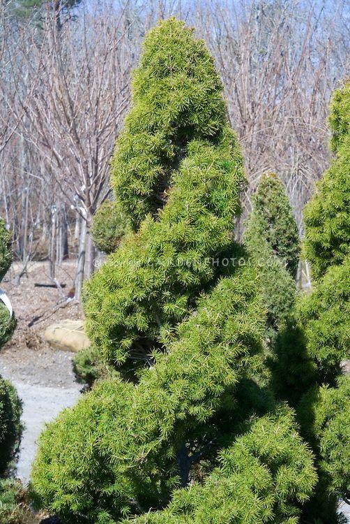 Evergreen, Spirals and Soft light