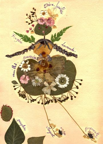 Characters of the forest: leaves & flowers, collected from autumn walks with children.