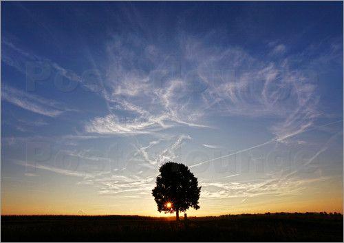 Martina Cross - Baum im Sonnenuntergang