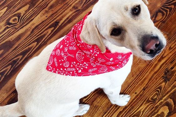 Dog Bandana 3 Sizes Available S M L With Template