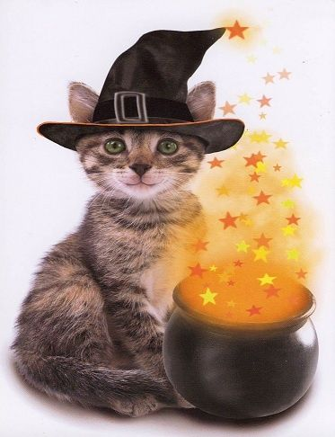 Cat with a cauldron