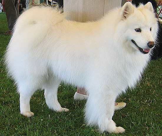 Herding Dogs, Dogs And White Dogs On Pinterest