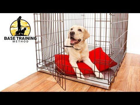Selecting A Crate Is One Thing But The Process Of Crate Training