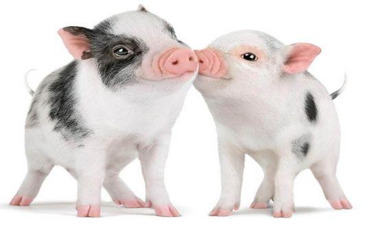 I just love cute little piggies!! :)