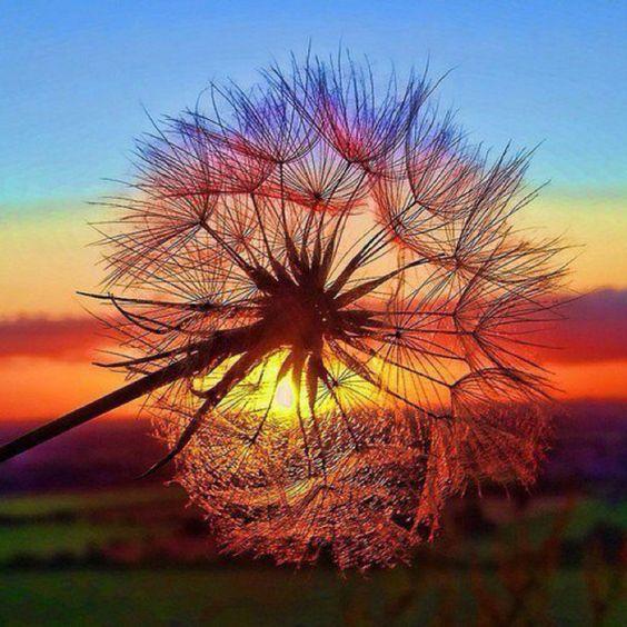 Criações de Deus. O lindo Pôr-do-Sol ♥