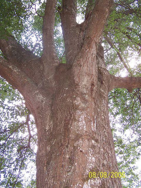 I love Trees, especially old majestics!