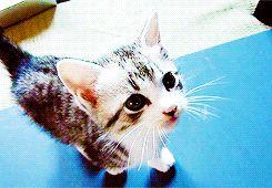 kittycatdaily