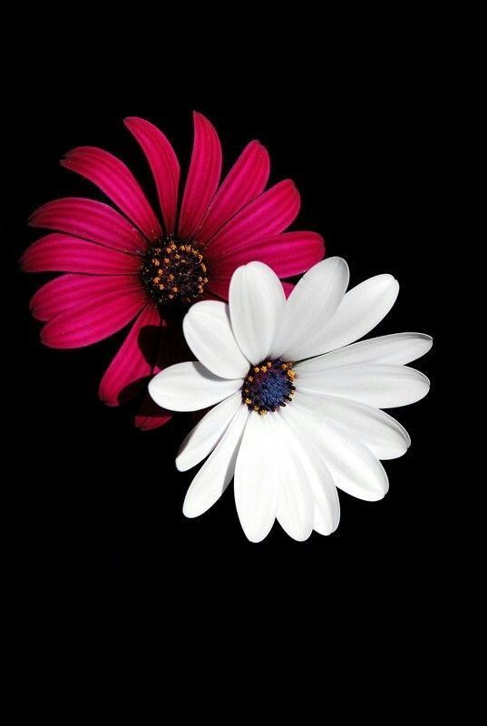 Pin On Cute Flower Wallpapers Images 4k Full Hd