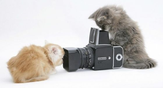 What cats did before the digital age.