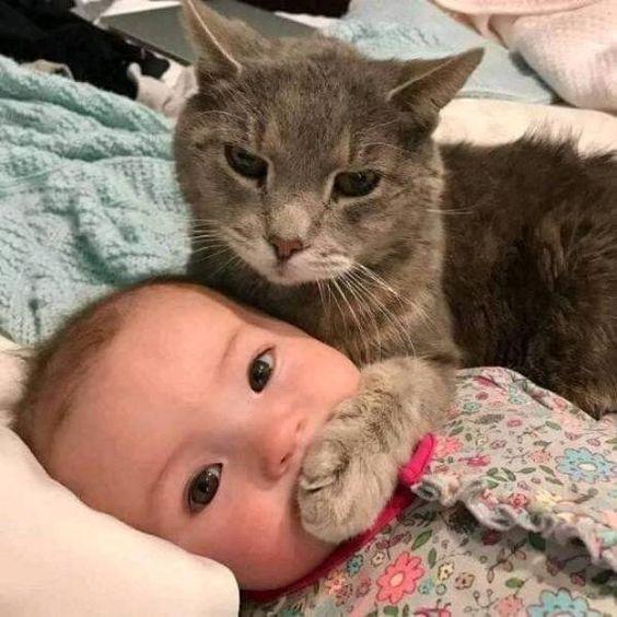 『 ママ、目じりにシワが…。』 『 それは言っちゃダメにゃ。』 - ネコへのボケ[65811873] - ボケて(bokete)