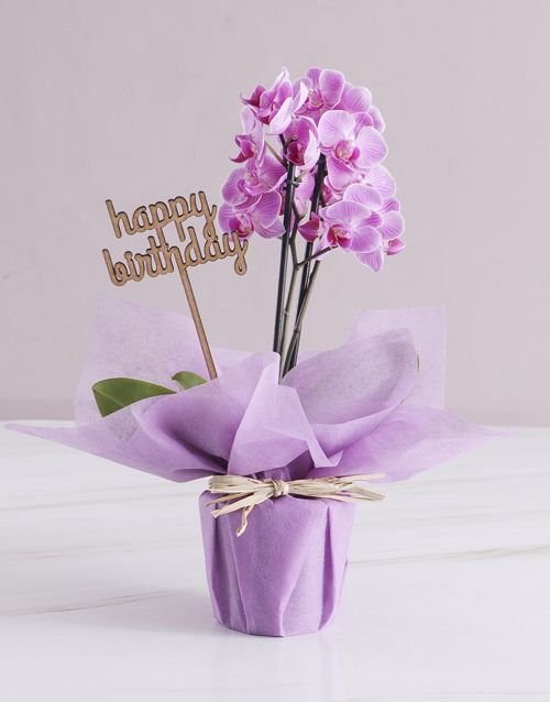 Pink Midi Birthday Orchid In Wrapping Orchid Gifts How To Wrap Flowers Orchid Flower Arrangements Orchid Card
