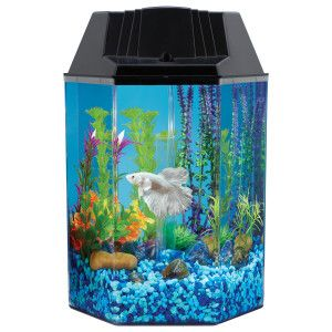 Pinterest the world s catalog of ideas for Petsmart fish filters