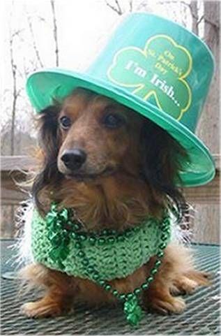 adorable, awww, costumes, cuteness, dog in costumes, irish, labrador, Leprechaun, st patricks day, sweet