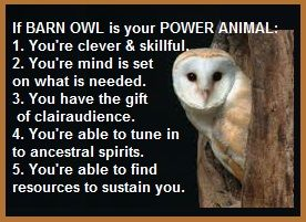 Did You Know If Your Power Animal Is A Barn Owl
