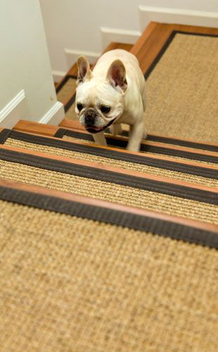 Pet Stair Treads : Casa : Pinterest : Dog stairs, Pets and Stairs