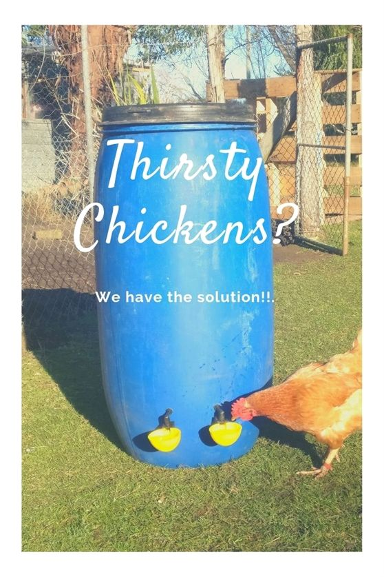 Need Some Quick Gardening Advice Read This Chicken Waterer Chicken Waterer Diy Chicken Diy