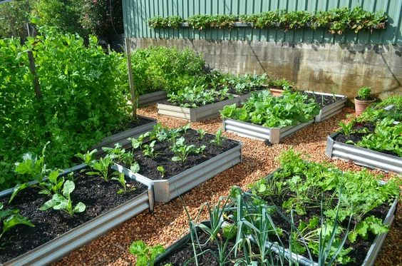 Corrugated steel raised beds for vegetables beautiful for Beautiful raised gardens