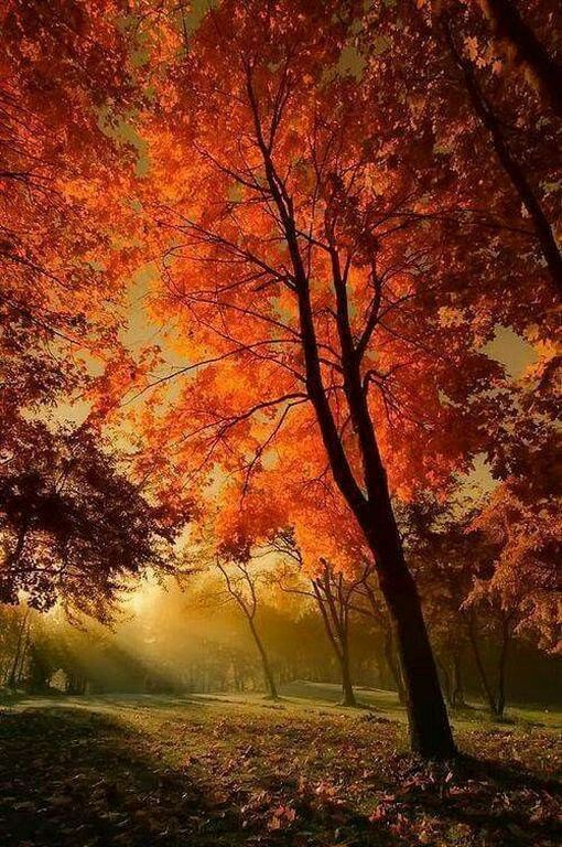 28 Amazing Sunset Forest Photography Ideas At Night Orange | Autumn  scenery, Autumn scenes, Fall pictures