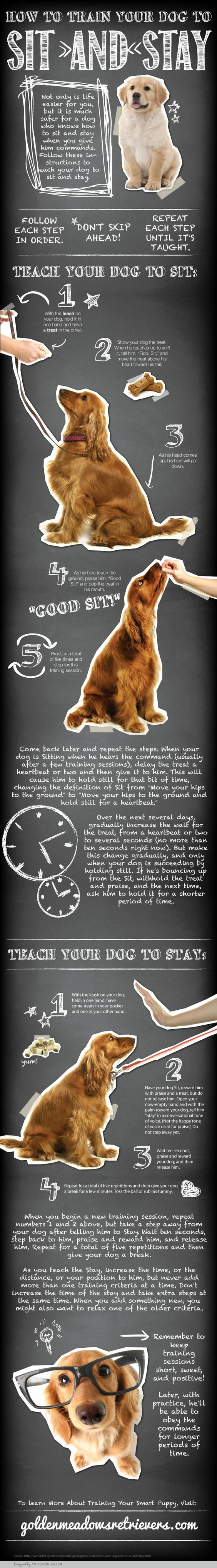 [Infographic] Teach Your Dog to Sit and Stay - http://www.pawsforpeeps.com/sitandstay/: