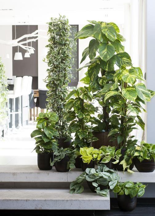 Rosliny Doniczkowe O Ozdobnych Lisciach Plants House Plants Plant Decor