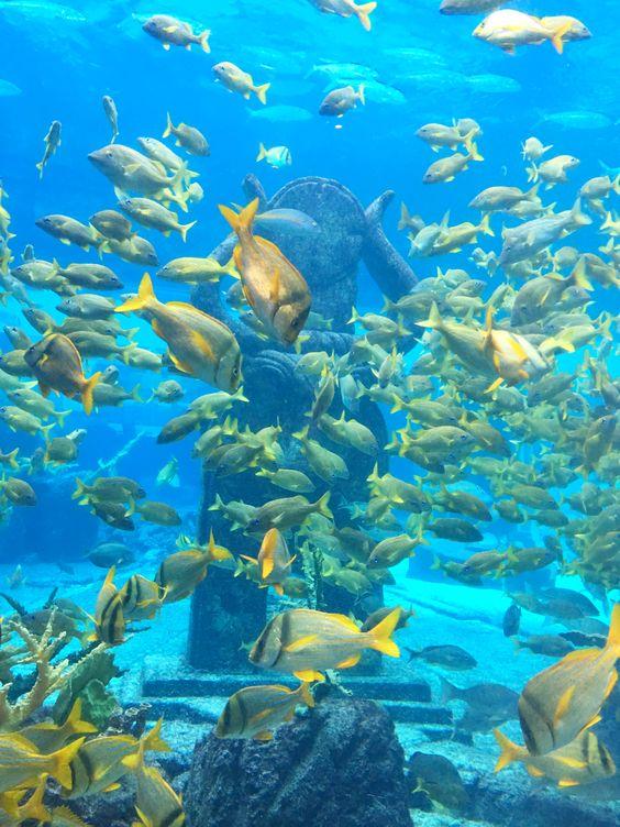 Explore The Dig at #AtlantisResort - the world's largest open air marine habitat!