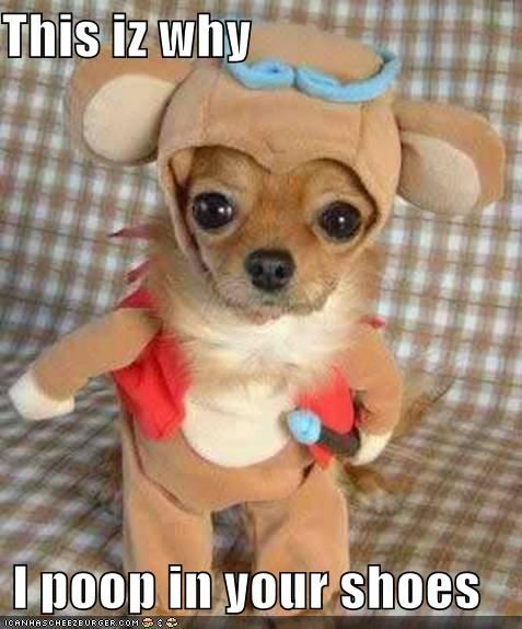 Reminds me of my grandpuppy cosmo the chihuahua! He actually gets depressed if you put clothes on him and he won't move!
