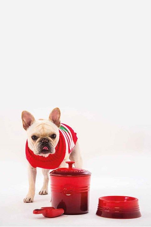 Le Creuset S Pet Collection Will Make Your Designer Dog S Day