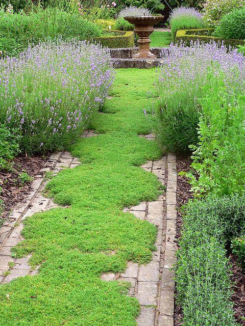 Canteiro de ervas- lavanda, manjericão, tomilho, orégano, alecrim camomile as lawn