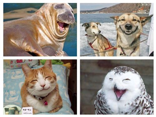 Happy animals!