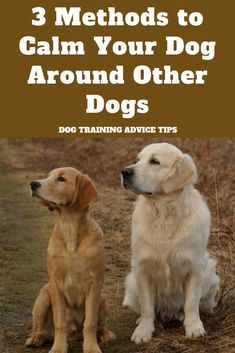 Pin By Samanta Li On Puppy Calm Dogs Dog Training Dog Training