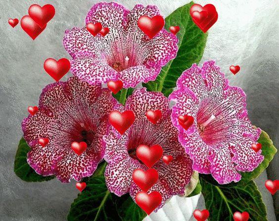 red valentine rose maplestory
