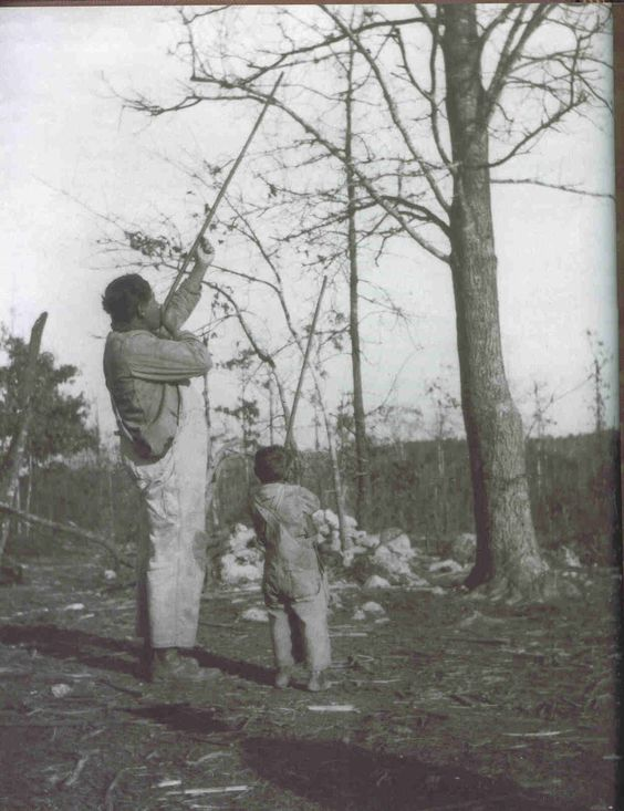 Cherokee hunting with blow guns.