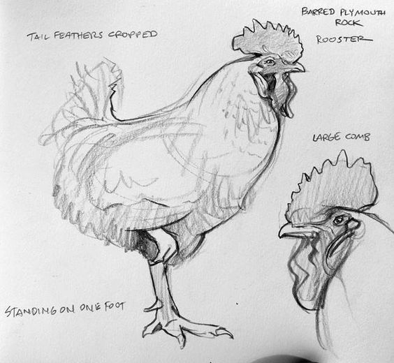 Find more at https://www.facebook.com/CharacterDesignReferences if you're looking for: #art #character #design #model #sheet #illustration #best #concept #animation #drawing #archive #library #reference #anatomy #traditional #draw #development #artist #how #to #tutorial #birds #bird