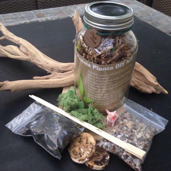 DIY Terrarium Kit, Succulent Terrarium, Moss Terrarium, Terrarium Kit ...