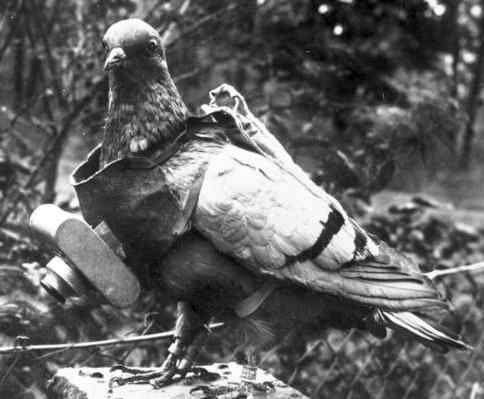 Un appareil photo pour pigeons, utilisé pendant la guerre pour prendre des photos aériennes.