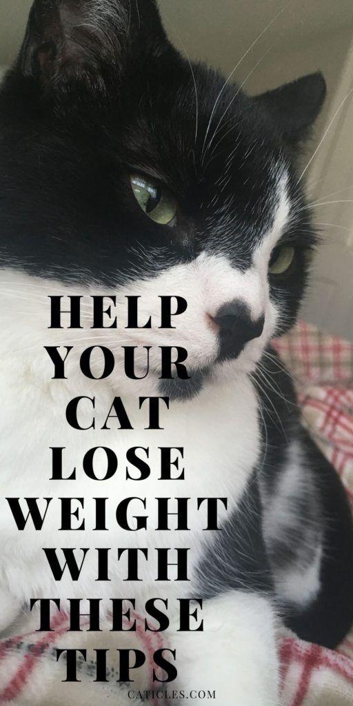 680466a1ac9391d28b9a626a5d6a1eb6 - How To Get My House Cat To Lose Weight