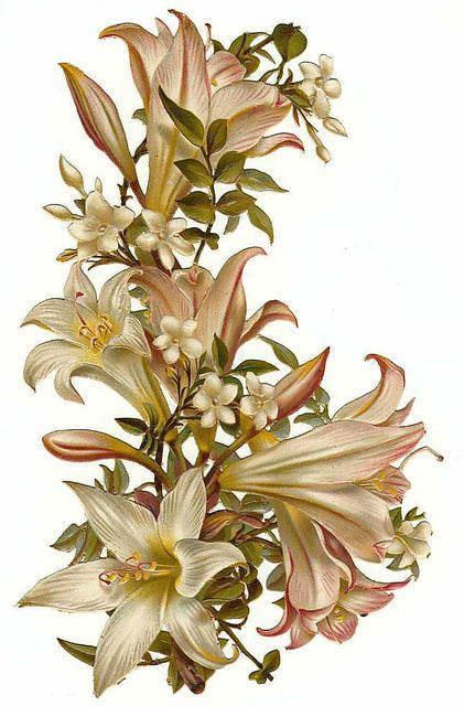 white lilies & small white flowers: