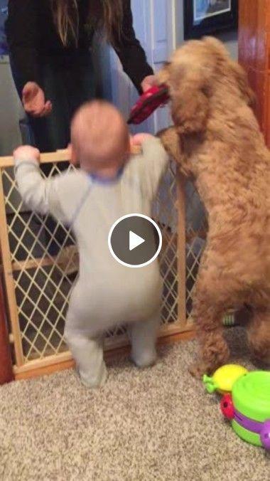 criança esta qurendo pular cercado co o cachorro…