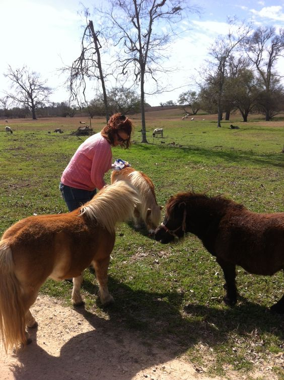 Saltbox @ Wakefield Farms Chappell Hill, Texas  The Ponies