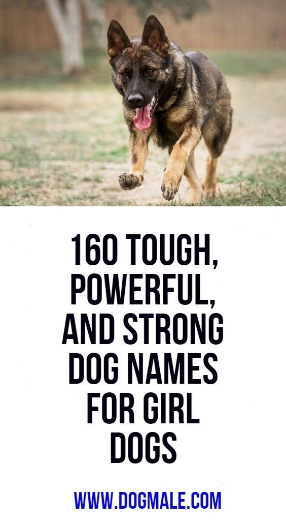 160 Tough Powerful And Strong Dog Names For Girl Dogs Girl Dog