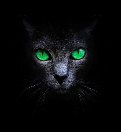 At What Age Do Kittens Eyes Change Color Kitten Eyes Black Cat Art Cat Art