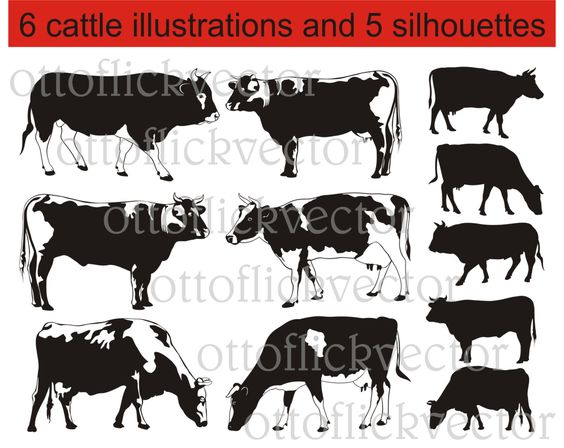 CATTLE SILHOUETTES vector clipart, cows and bulls vector ...