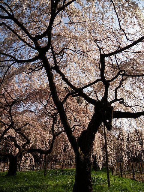 Loveliness of spring