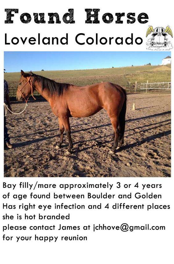 Found horse in Loveland Boulder area Bay Mare / Filly