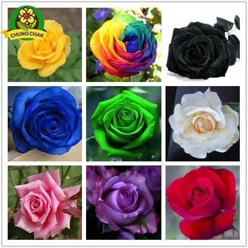 Rare Blue Rose Plants Flowers Perennial Bonsai Garden Home 50 Pcs Seeds NEW 2021