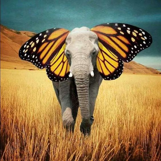 Find quotes based on animals, esp. butterflies, for a persusavie essay.?